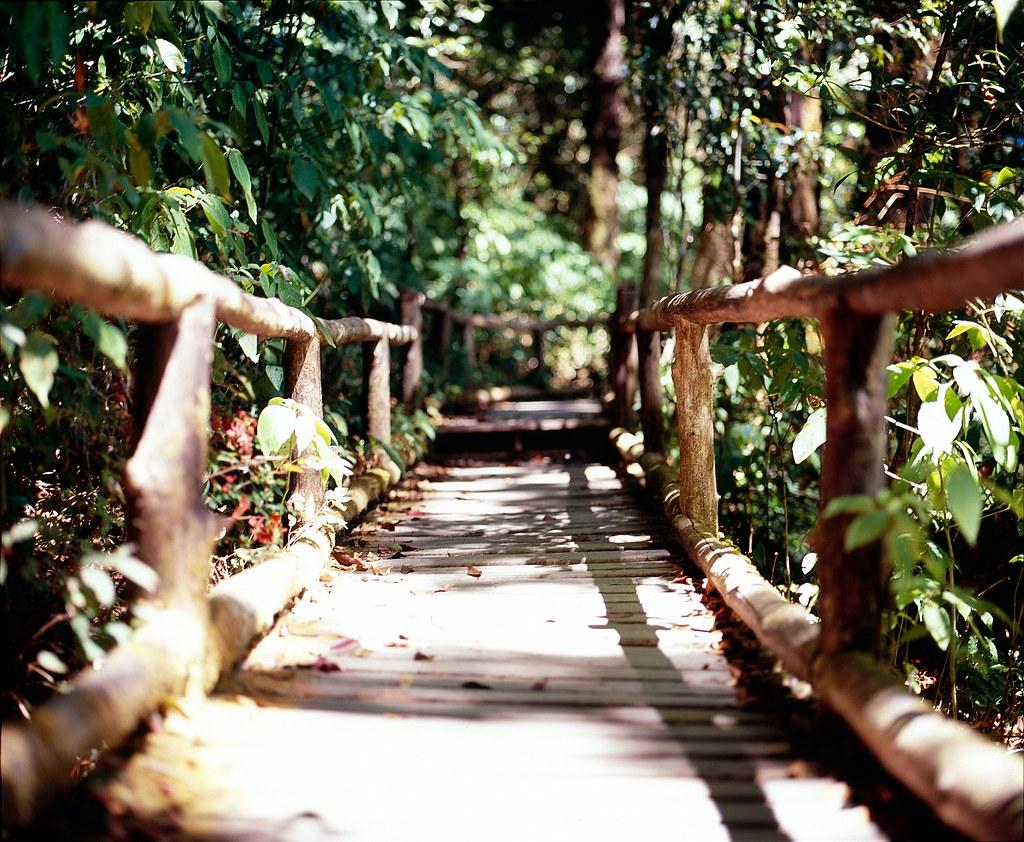Doi Inthanon   Doi Inthanon national park Mamiya RZ 67 pro I…   Flickr