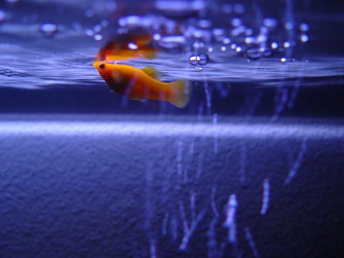 Little fish | by vauvau