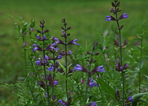 flowers flower green nature grass al purple blossom alabama moms bloom tanner dads bkhagar