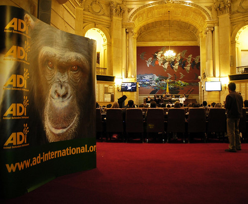 Save The Primates Launch, Colombia | by savetheprimates