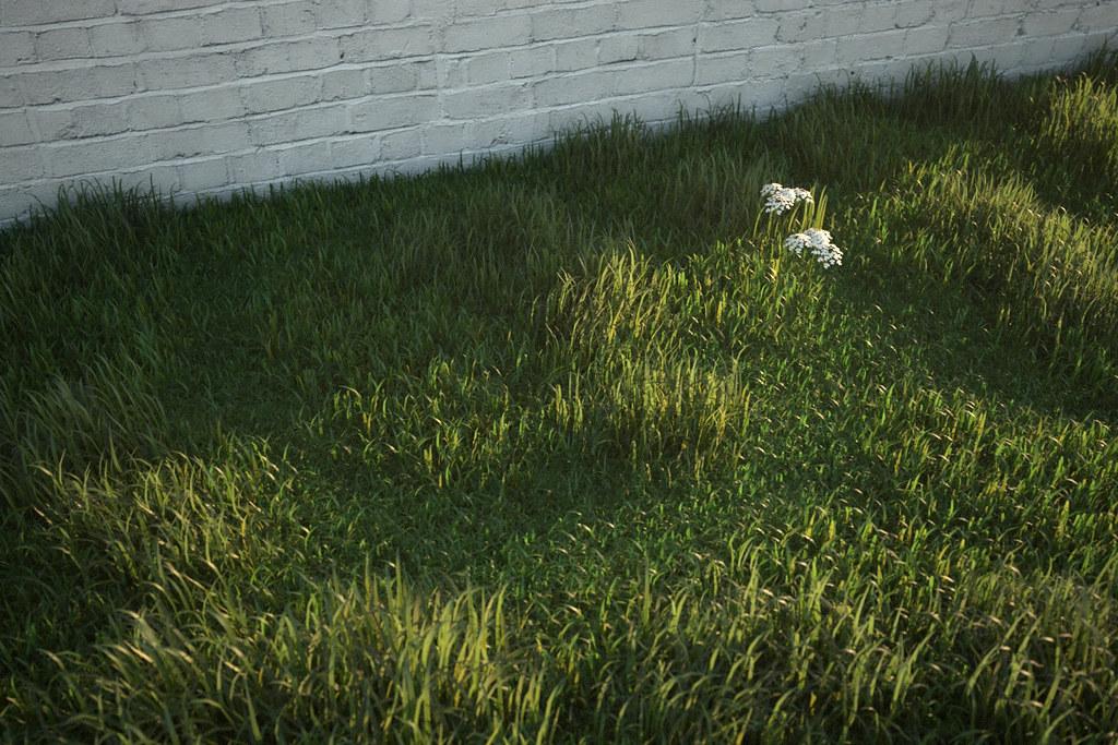 cam01_longgrass0000 by Peter Guthrie
