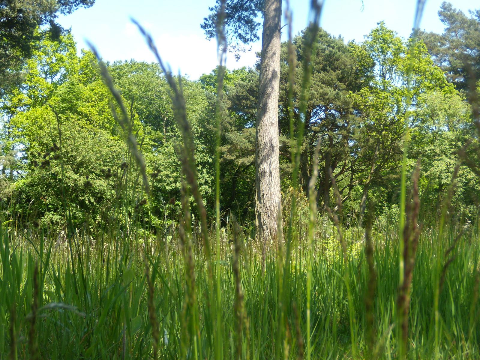 grass Haslemere round