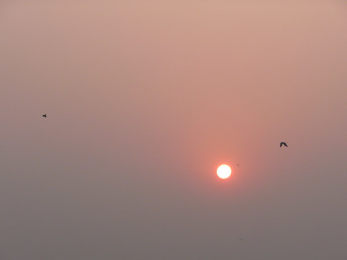 india sunrise crows kolkata westbengal durgapurbridge