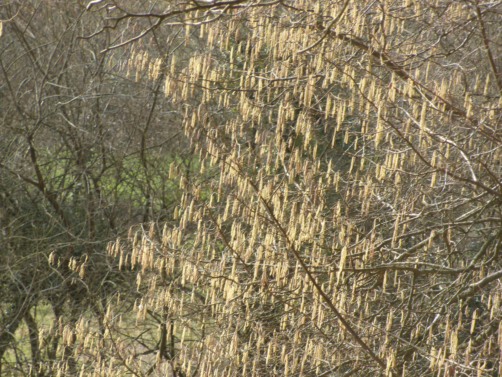 Catkins Petersfield to Liss