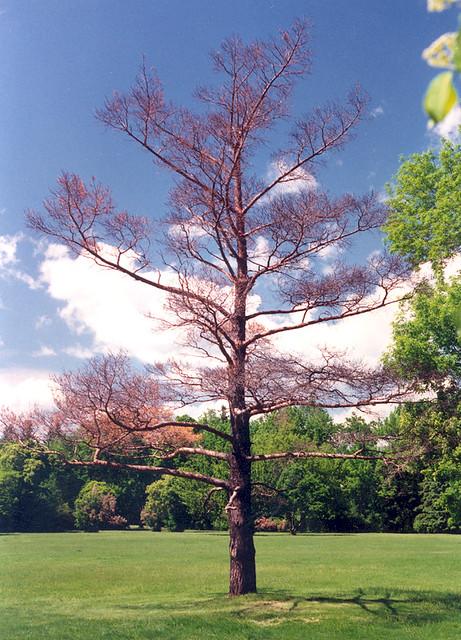 Photo assignment: Nature