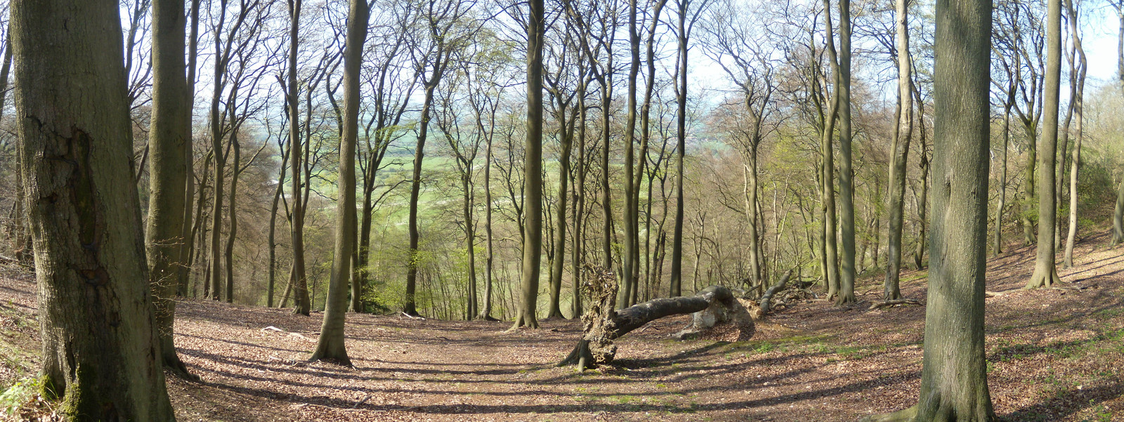 View through trees The woods past Pulpit Hill. Wendover Circular