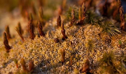moss spring photoblog2009