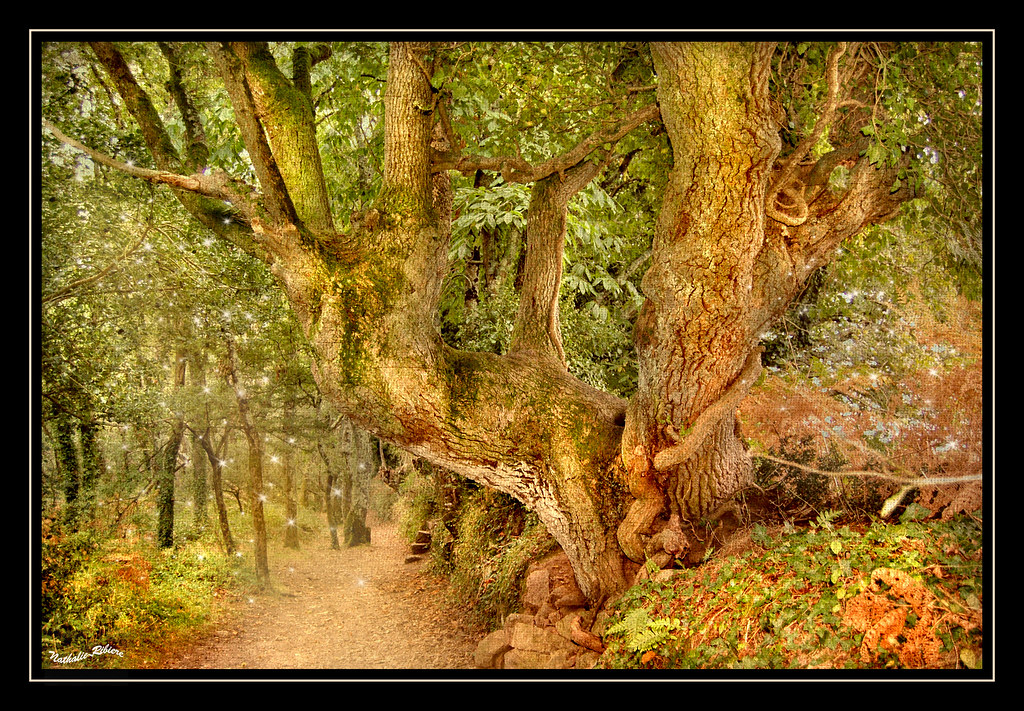 TheMagical-ForestFlickr by nathalie56☆