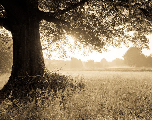 mist tree nature grass silhouette fog sepia sunrise virginia manassas