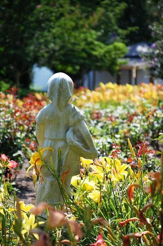 flowers summer june statue garden petals nikon northcarolina lilies daylily bloom statuary daylilies blooming easternnc easternnorthcarolina pittcounty thebeddards