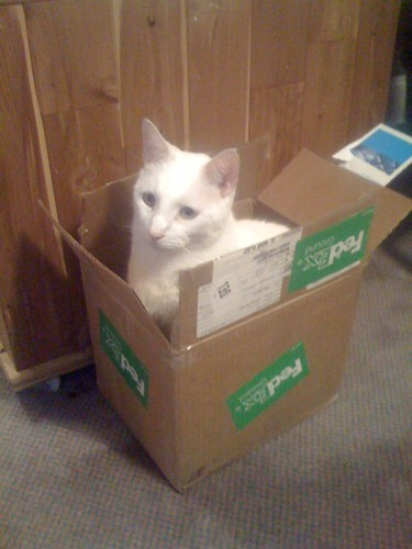 Chuck the Cat insists that any box is a good box if you're a cat! | by adecker31