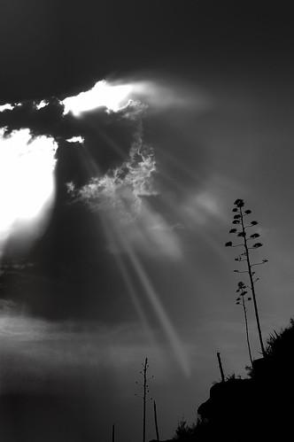 sunset blackandwhite bw tree blancoynegro monochrome backlight clouds contraluz dark arboles cloudy nikond70 downhill nubes nublado sunrays ocaso rayos oscuro ladera 11rue daarklands