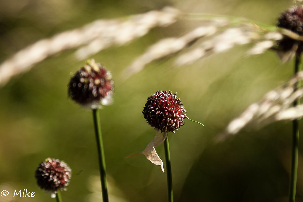 Seed pods in the grass