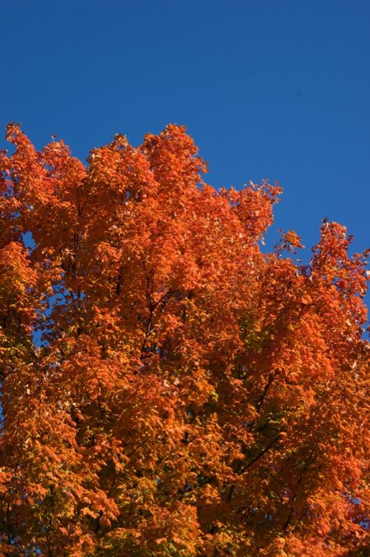 Orange and sky