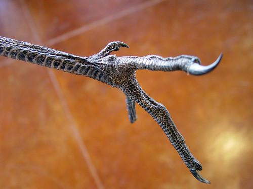 Sandhill Crane foot