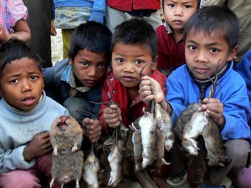 Rat plague: Chin state, Burma | by Benny Manser