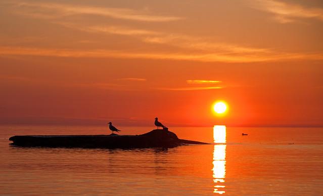 Sunrise & Seagulls
