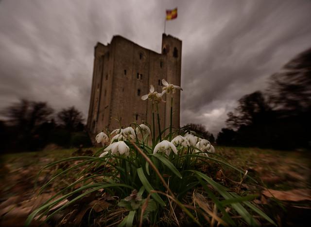 Hedingham castle Snowdrops