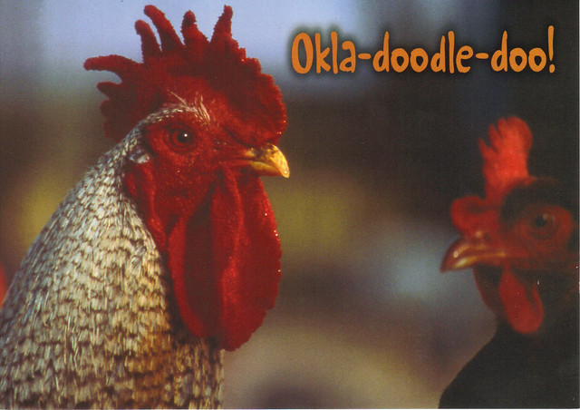 What Oklahoma Rooster's Say Postcard