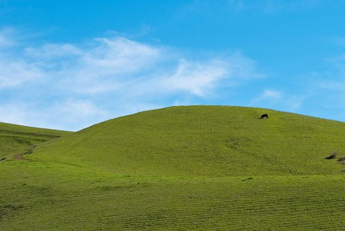 Blue sky, green hill, and a cow! (cropped) | by Images by John 'K'