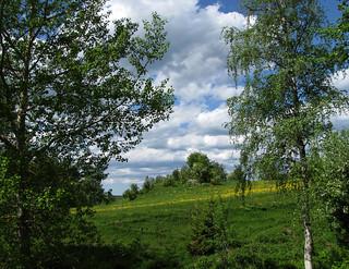 Hackås | by YlvaS