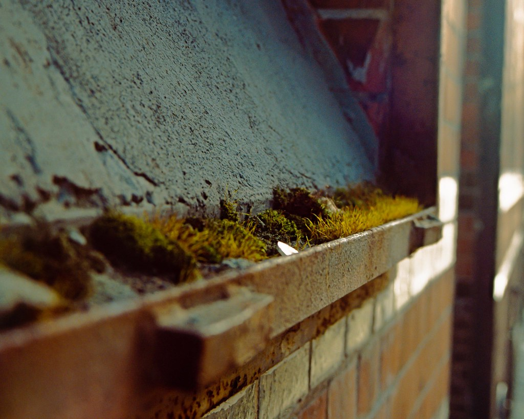 Moss 2 by Jannik Hildebrand