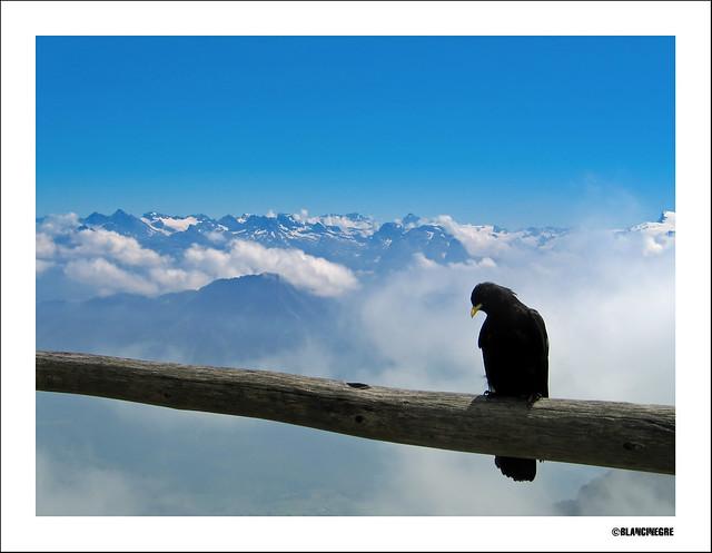 Ànima aïllada / Soul in isolation