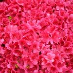 Flowers #42