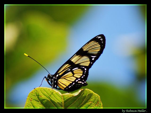 My butterfly on blue sky ...