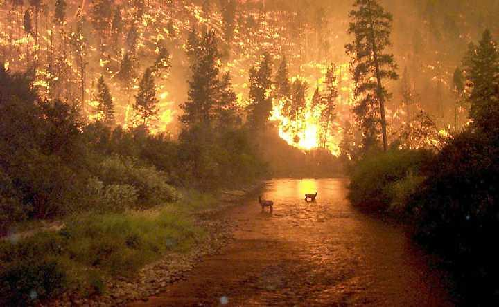 Forest Fire Animals in River