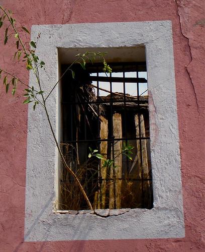 Puebla - Hojas para miles de tamales