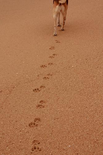 Step by Step | by sziliotti