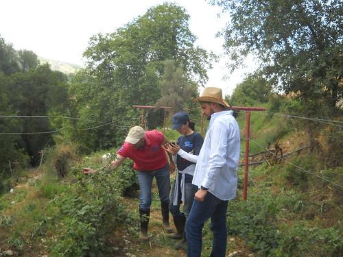 Talal & Tamim & Sarah visit Nabeh Elsafa inspection aa May 22, 2015   by toutberryfarms