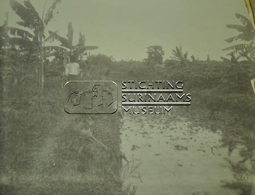 Rijstvelden   by Stichting Surinaams Museum