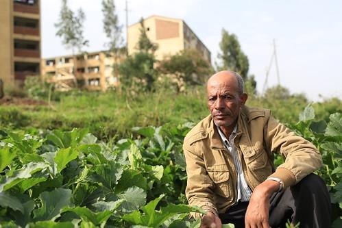 Urban farmer Fekadu Sebani inspects his cucumbers in Addis Ababa