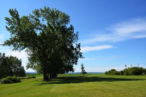 summer canada tree june landscape big alberta beaverlodge 6月 2015 六月 カナダ minazuki 水無月 アルバータ州 rokugatsu monthofwater 平成27年