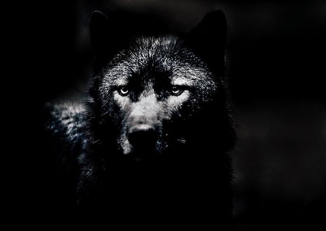 I Howl my pain at the Moon