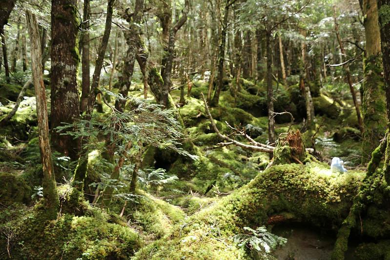 天狗岳の登山 苔の森