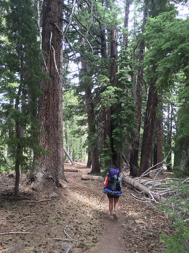 PCT: Day 82