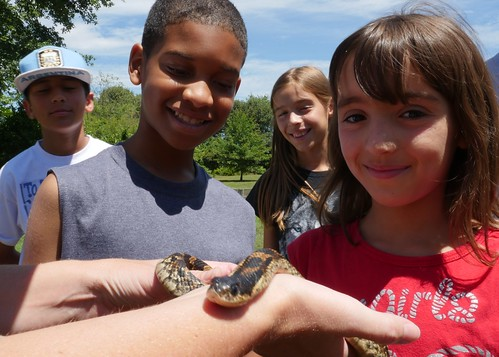 Photo of kids at park learning about snakes