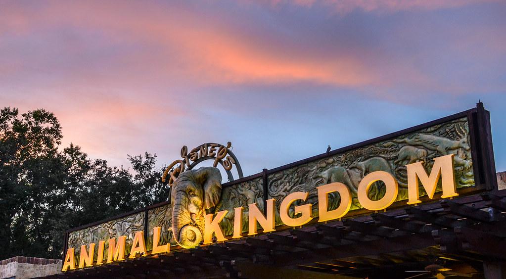 Animal Kingdom sunset