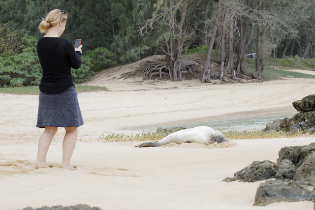 Stacy & Monk Seal