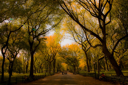 newyork centralpark park streetphotographing cityview streetview fall fallleaves art urban city in weekend relaxing nature colours street garden leaves bench people