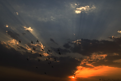 blue sunset sky orange birds clouds sunrays pune mws thepca soumitra inamdar soumitra911