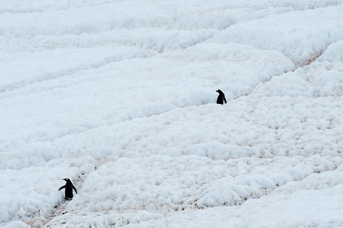 Penguin Highway | by phoenixfeather