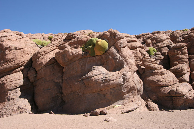 Rocks and green growths