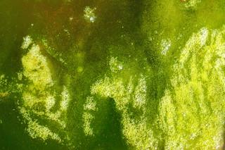 Pond Scum | by Max F. Williams