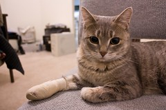 Bandage Kitteh 1 | by SpammT