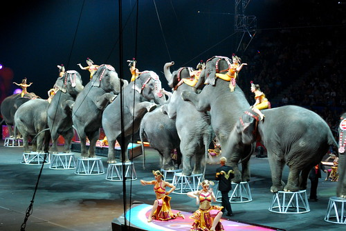 circus elephants | by wolfsavard