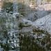 Waterfall + Trees